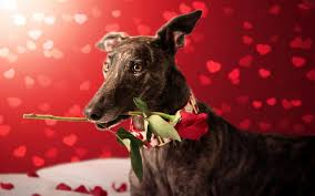 The Best Valentine's Date Is Your Pet